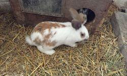 Kasper, ca. 13 Wochen alt