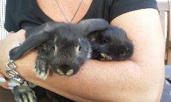 Miss Hubba & Mister Bubba, 7 Wochen