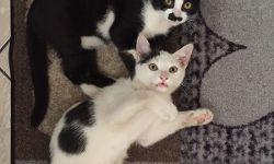 Luna & Luca, 14 Wochen