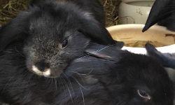 Merlin & Cleo, ca. 6 Wochen
