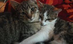 Schwestern Bounty & Susi, 6 Monate