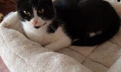 Katze Mausi, ca. 2 Jahre