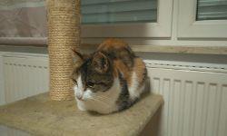 Katze Bella, ca. 2 Jahre