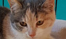 Lara, 3-4 Monate