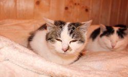 Katze Süsse , ca 6 Monate