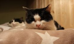 Katze Henriette