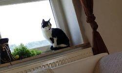 Katzenpaar Mausi & Baby