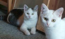 Lukas & Lilo